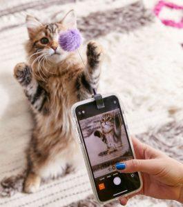 clip selfies pour chat